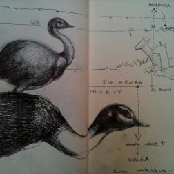 Emu-pampa Rio negro