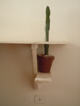 cactus -table
